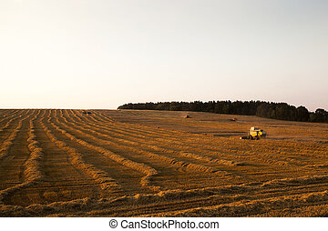 cereal harvest Sunset - agricultural field, which made the...