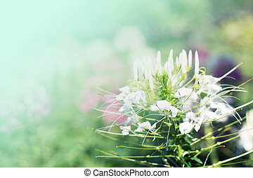 White flowers with bokeh blured