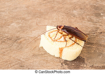 Cockroach eating a bread on a wooden table