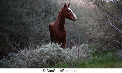 brown wild horse in nature