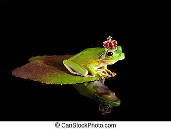 Frog prince on leaf - White-lipped tree frog prince with...