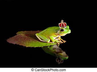 Frog prince on leaf