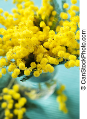 Mimosa flower - Brunches of beautiful Mimosa flower on cyan...