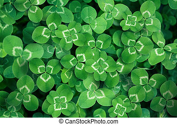 clover leaves full screen as a background