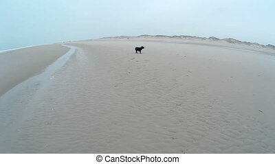 Dog playing on a Beach - Dog playing on the Beach of Amrum...