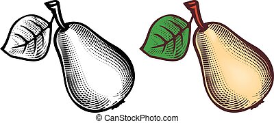 Pear - Engraving style picture of pear.