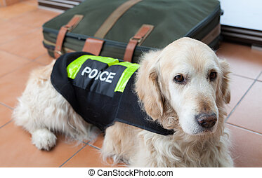 Police dog with distinctive - Golden Retriever dog next to a...