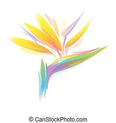 Bird of paradise flower - Bird of paradise Strelitzia...