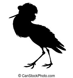 Snipe Birds Silhouettes Vector EPS 10