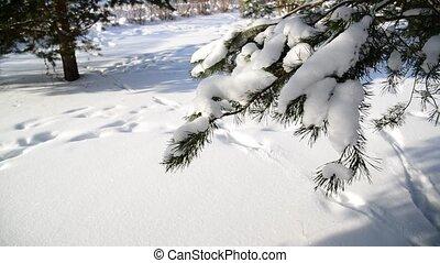 Winter fir park on sunny day