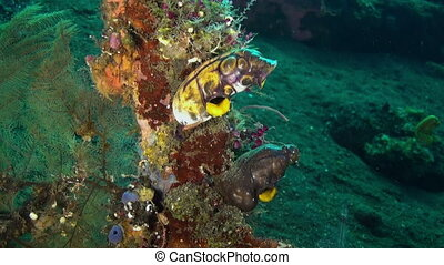 Hard Stony corals  and colorful fish in blue sea.