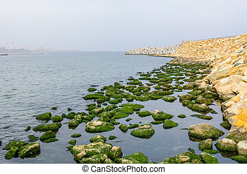 Rocks in water across pontoon with city behind. Rocks with green moss in calm water across seashore pontoon in winter time.
