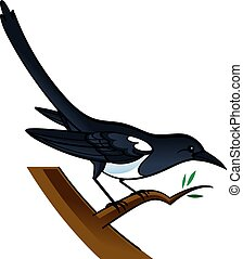 Magpie - Vector image of magpie bird