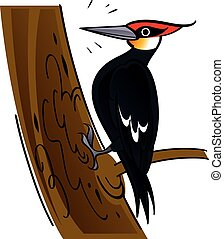 Woodpecker - Vector image of woodpecker bird