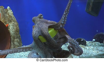 Octopus takes food from bottle - Octopus in aquarium shows...