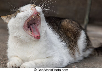 Old cat yawning bad teeth - Old cat yawning has bad teeth in...