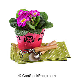 Flowers pot with garden tools isolated on white - Flowers...