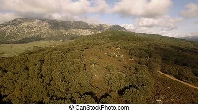 Aerial, Flight over trees, forests and hills, Andalusia,...