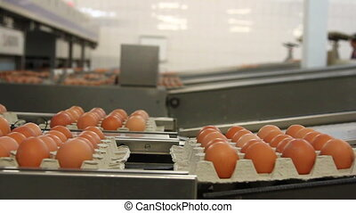 Egg factory. Production line with fresh eggs