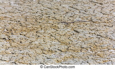 Barren Field With Dried Volcano Mud - DOLLY SHOT Barren...