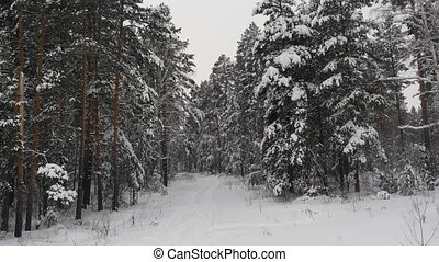 Path in Snowy Forrest
