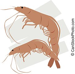 types of Prawns with a background - Illustration of two...
