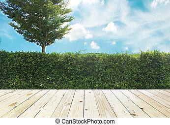 Grown tree wall and ornamental shrub