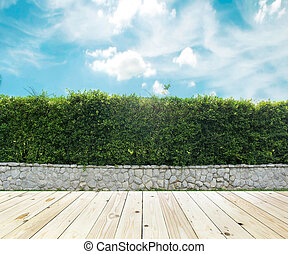 Grown tree wall and ornamental shrub