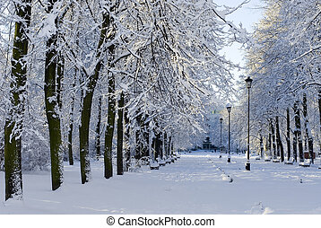 Winter park view - Fresh snow in the city park alley with...