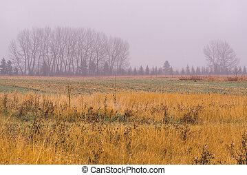 Rainy Autumn Tree Line Landscape - Rainy prairie landscape...