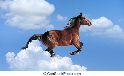 Blue sky with brown horse - Brown horse gallop on blue sky...