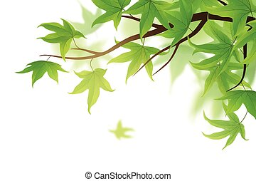 Frond with green leaves - Spring frond with green maple...