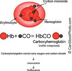 Carboxyhemoglobin. Joining the hemoglobin carbon monoxide....