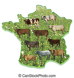 Cows on a map of France - cows in a meadow on a map of...