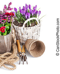 Spring flowers in basket with tools for gardening