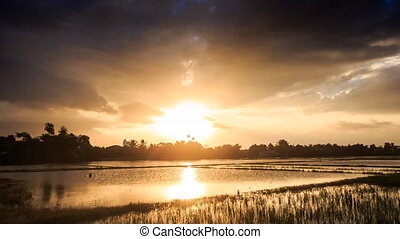Sunlight from behind Clouds over Water Rice Fields at Sunset...