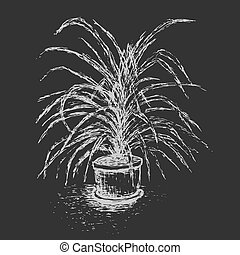 House plant in flower pot isolated on dark gray background...