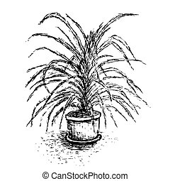 House plant in flower pot isolated