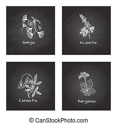 Handdrawn Medicinal Herbs - Health and Nature Set -...