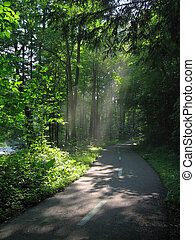 Sunlight through Trees - Sunlight streaming through trees in...