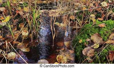 Swamp In Autumn Forest - swamp with dark water in autumn...