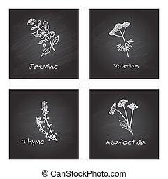 Handdrawn Medicinal Herbs - Health and Nature Set
