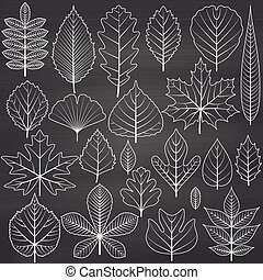 Set of tree leaves on chalkboard background Twenty different...