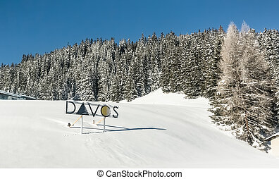 Snow-covered fir trees on a sunny day, Davos, Switzerland