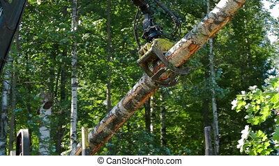 Mechanical Arm of Feller Buncher loads tree trunks - Feller...