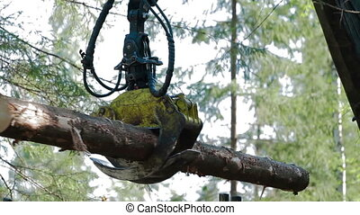 Feller Buncher loads tree trunks in forest - Feller Buncher...
