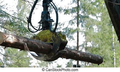 Feller Buncher loads tree trunks in forest - Feller Buncher...