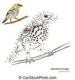 Speckled tanager bird learn to draw vector - Speckled...