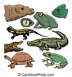 set of illustrations of reptiles, with crocodile, lizard, turtle