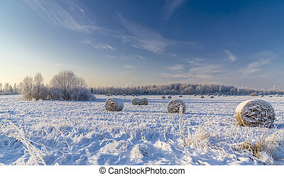 Snow covered hayfield - Snow covered field with rolls of hay...
